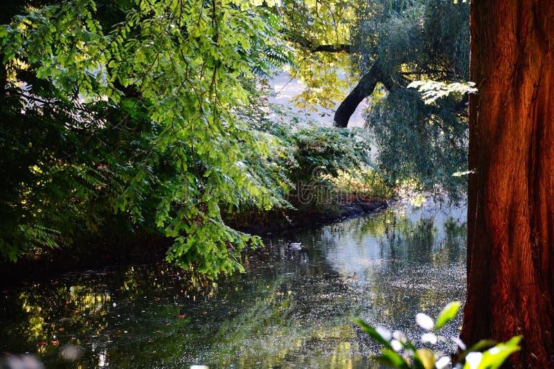 träd för vatten för sjöhöstreflexion arkivfoton