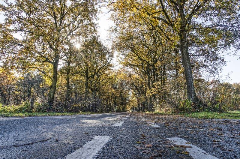 Träd-fodrad asfaltväg royaltyfri fotografi