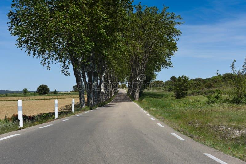 Träd fodrad D-väg - Frankrike royaltyfri fotografi