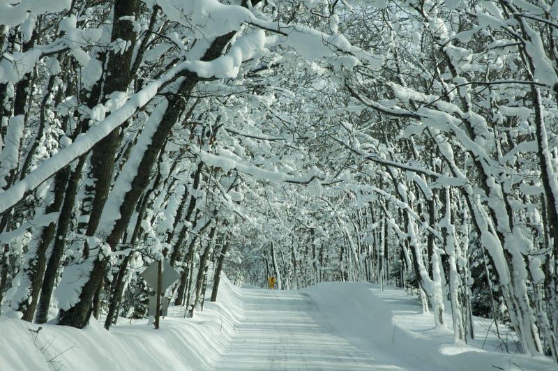 Träd fodrad dold väg för snö arkivbild