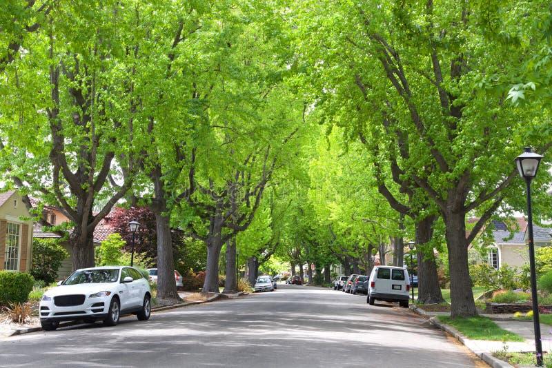 Träd fodrad grannskap med lampstolpar fotografering för bildbyråer