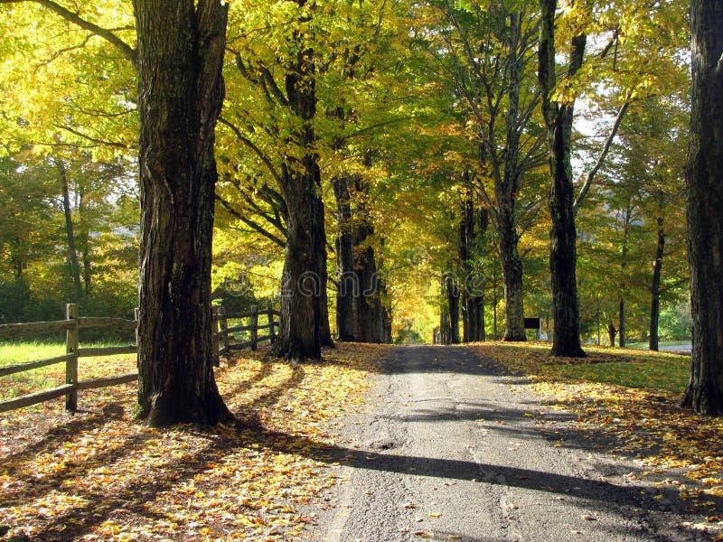 Träd fodrad körbana royaltyfria foton