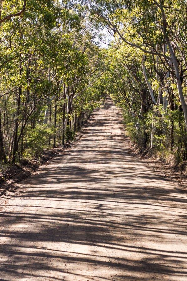 Träd fodrad lantlig grusväg för australiskt land som omges av eukalyptuseukalyptusträd royaltyfria foton