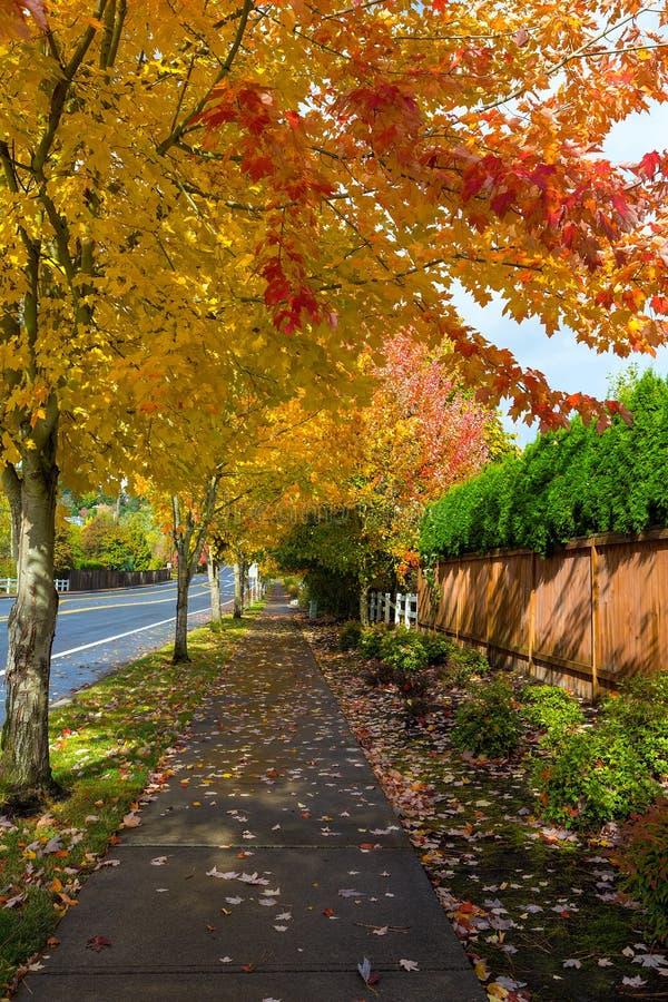 Träd fodrad trottoar i nedgångsäsongen USA Amerika royaltyfria bilder