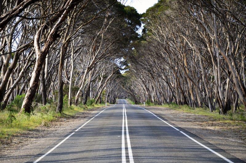 Träd fodrad väg på känguruön arkivbild