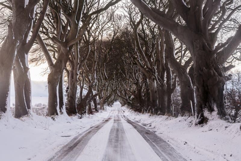 Träd fodrad väg som täckas i snö royaltyfri foto