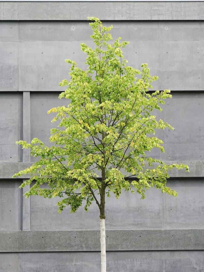 Träd framme av konkret byggnad arkivfoton