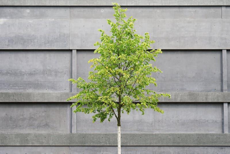 Träd framme av konkret byggnad arkivbild