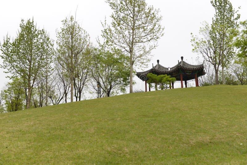 Träd, grönt gräs och paviljonger royaltyfria foton