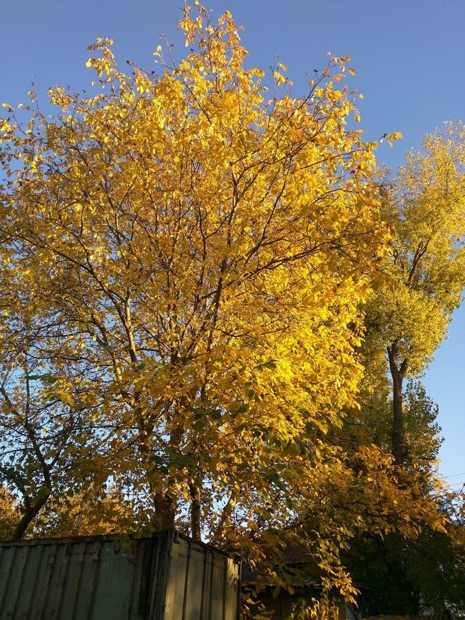 Träd i autmn arkivfoton