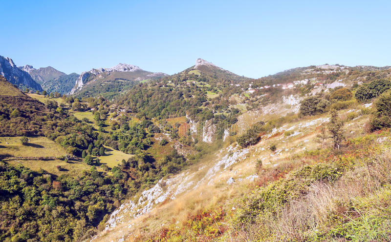 Träd i bergen av Asturias royaltyfri foto