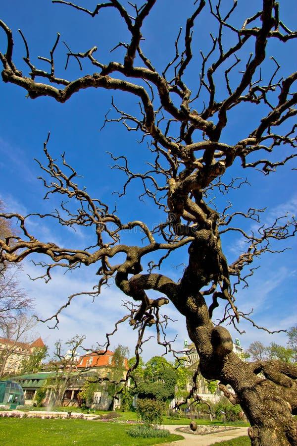 Träd i botanisk trädgård i Zagreb fotografering för bildbyråer