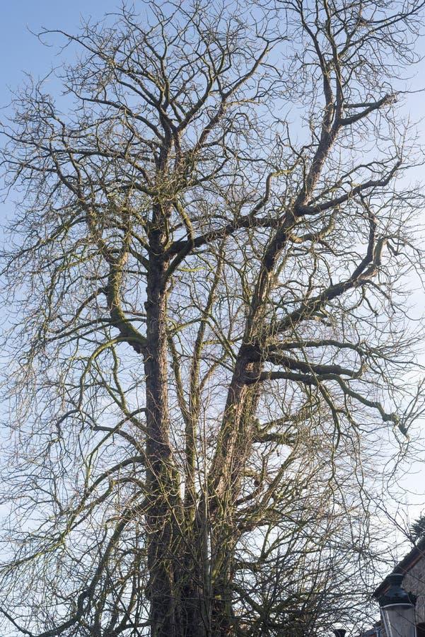 Träd i Bruges arkivbild