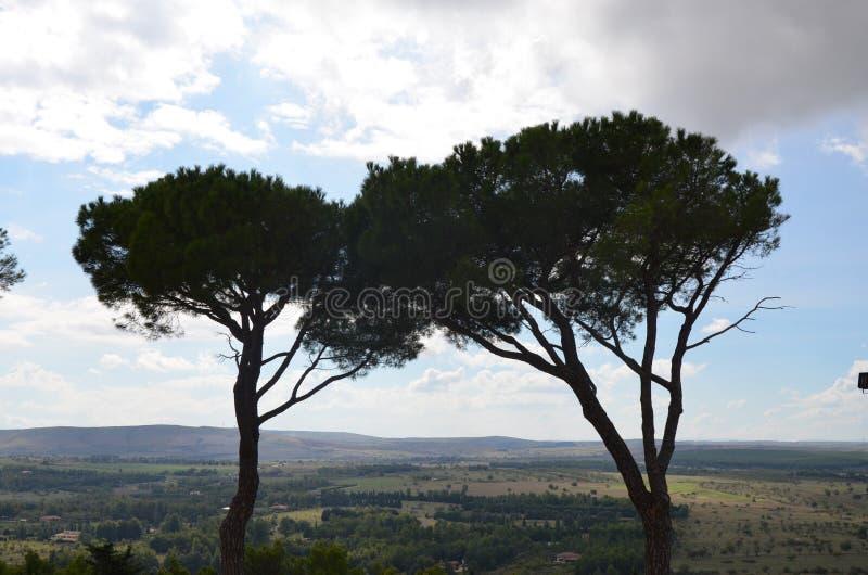Träd i Castel del Monte, Apulia, Italien arkivbild