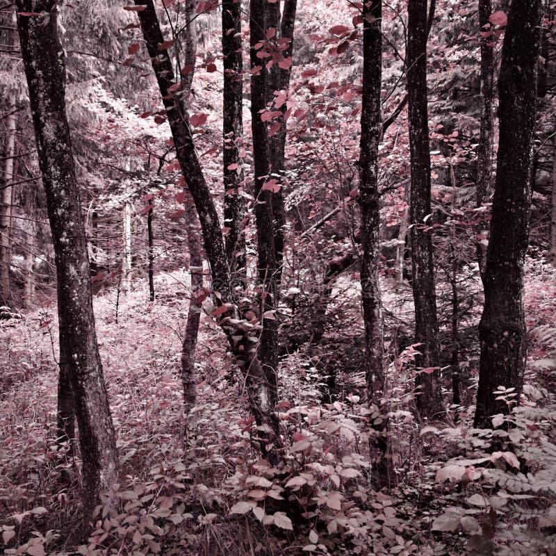 Träd i den Harz skogen med en tung färgensemble royaltyfri fotografi