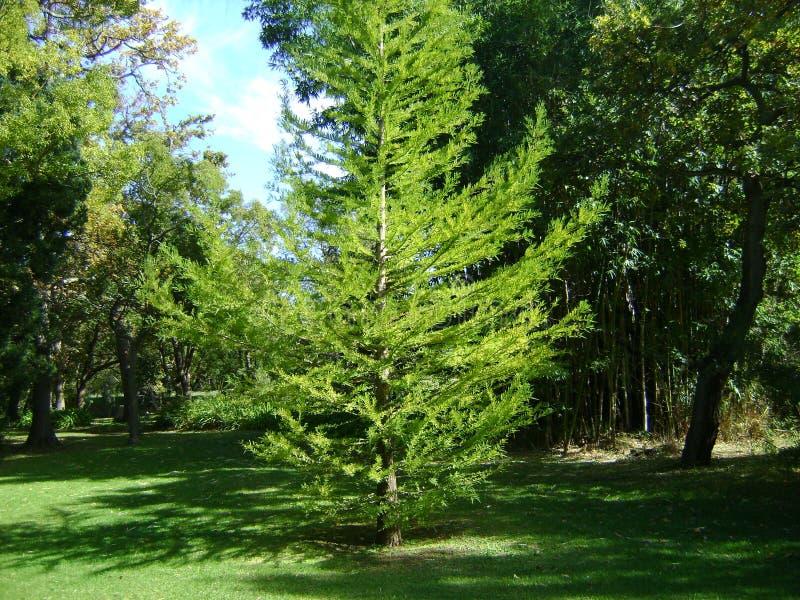 Träd i den Vergelegen trädgården royaltyfri foto