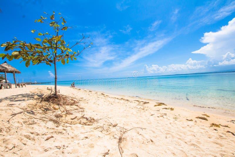 Träd i den vita sanden arkivfoto