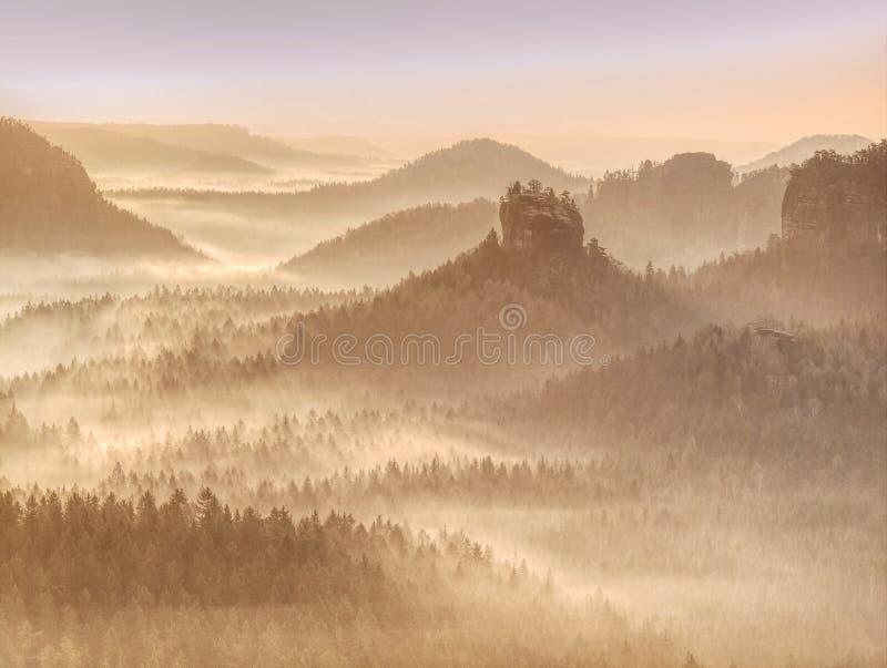 Träd i dimma och sol på en tidig höstmorgon royaltyfria foton