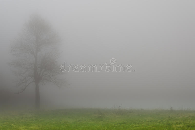 Träd i dimman royaltyfri fotografi