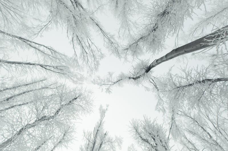 Träd i djupfryst skog med rimfrost royaltyfri bild