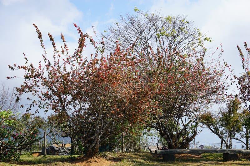 Träd i Doi Ang Khang royaltyfria foton