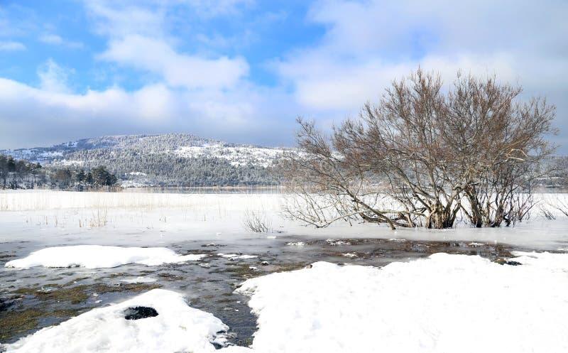 Träd i en iskall sjö i vinter arkivfoto