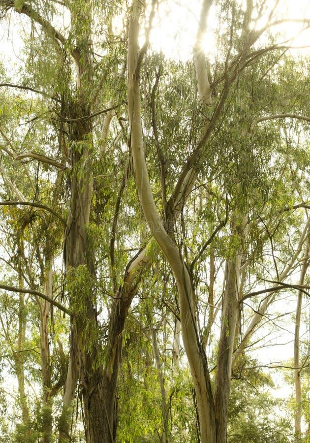 Träd i en skog för ett X arkivbilder