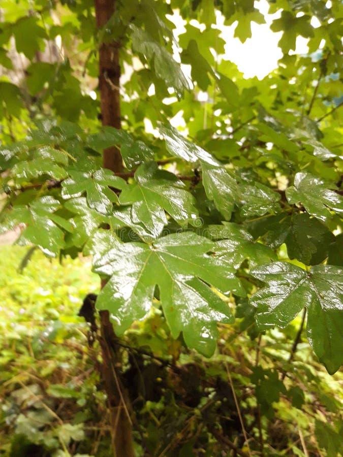 Träd i en trädgård med regn fotografering för bildbyråer