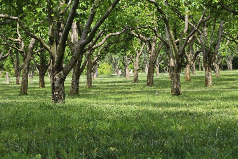 Träd i en trädgård på den regniga säsongen arkivfoto