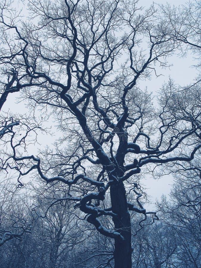 Träd i en vinterskog fotografering för bildbyråer