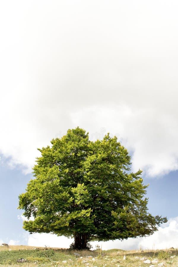 Träd i ett berg med ett moln arkivbilder