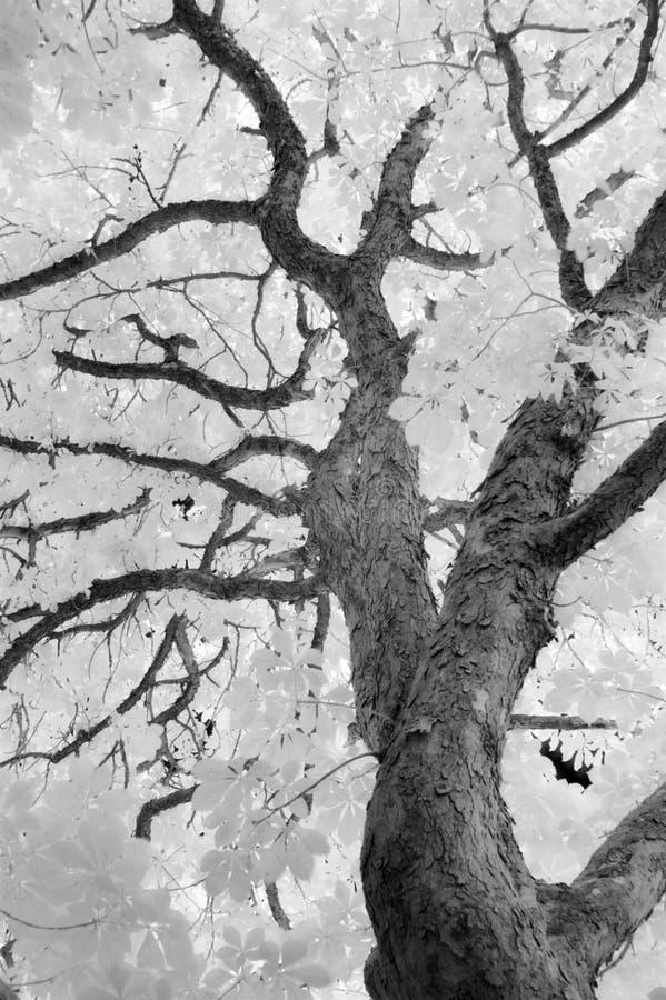 Träd i ett olikt ljus - IR-bild arkivbilder