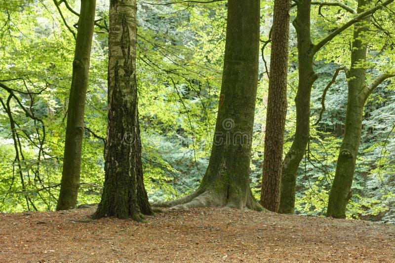 Träd i ett trä arkivbilder