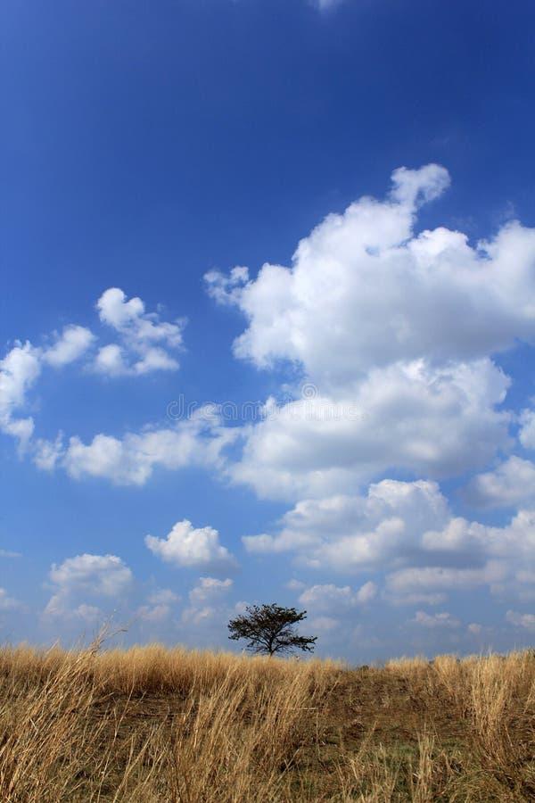 Träd i fältet arkivfoto
