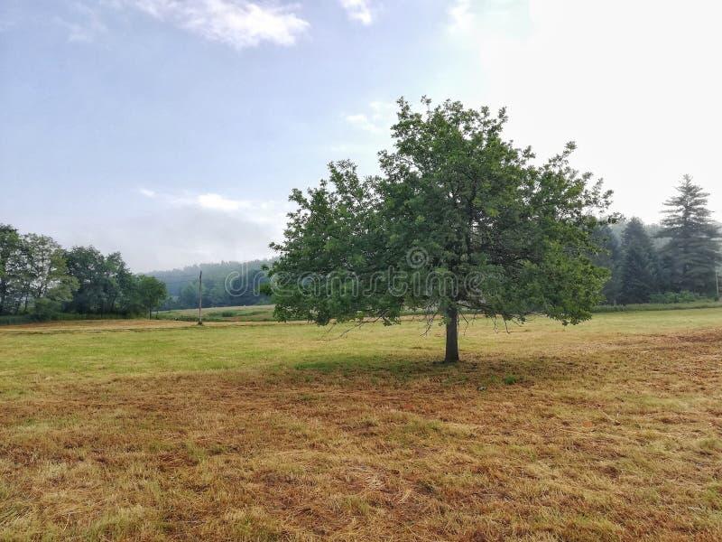 Träd i färg royaltyfri fotografi