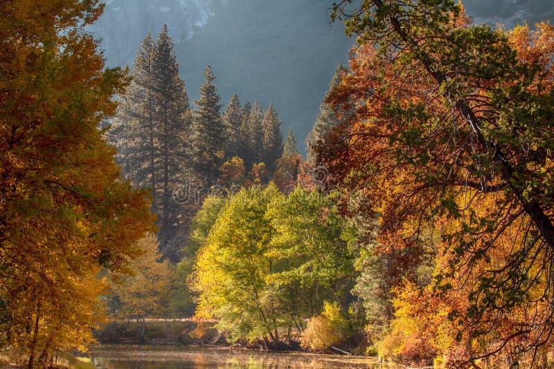 Träd i färger för en nedgång i den Yosemite dalen i Yosemite medborgare P royaltyfri bild