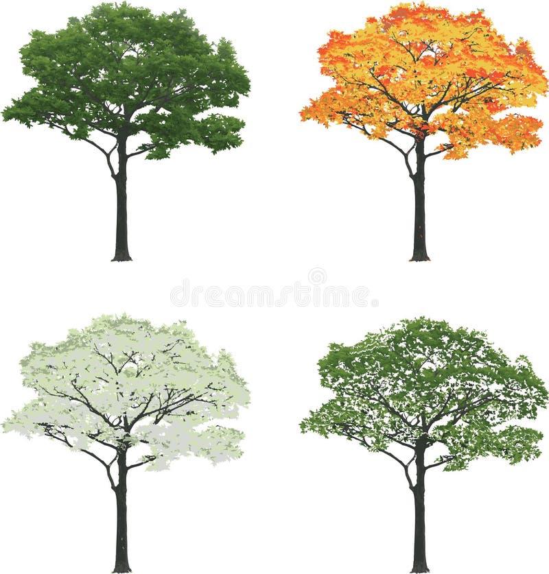 Träd i för sommarnedgång för fyra säsonger som våren för vinter isoleras på vit bakgrund vektor illustrationer