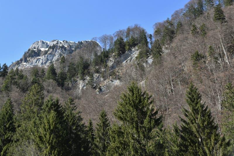 Träd i förgrund av klippklippor av Alperna täckta med snö nära sjön Klöntalersee arkivbilder