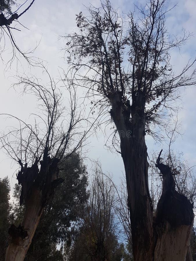 Träd i Fes arkivbild