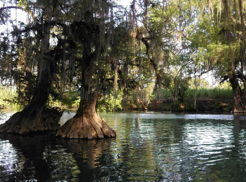 Träd i floden royaltyfria bilder