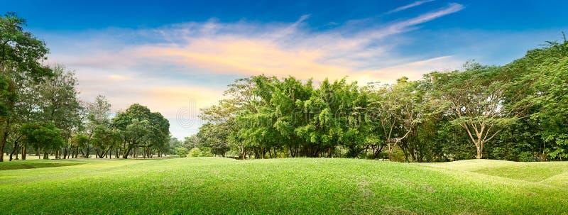 Träd i golfbana arkivfoton