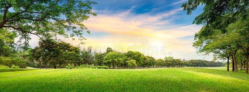 Träd i golfbana