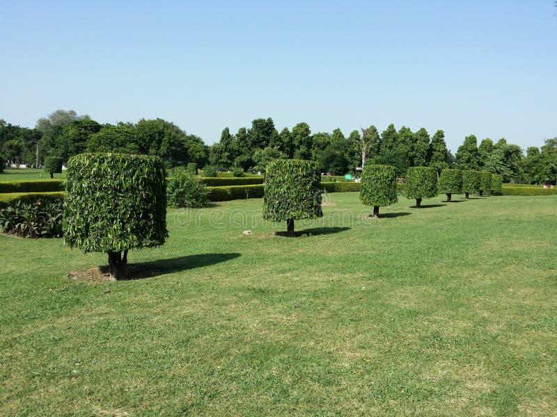 Träd i gränd arkivbild