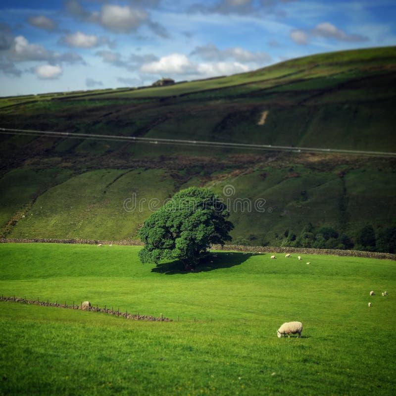 Träd i gräsplan arkivfoton