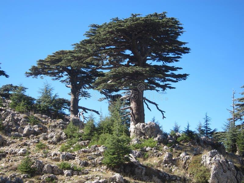 Träd i Grekland berg royaltyfri bild