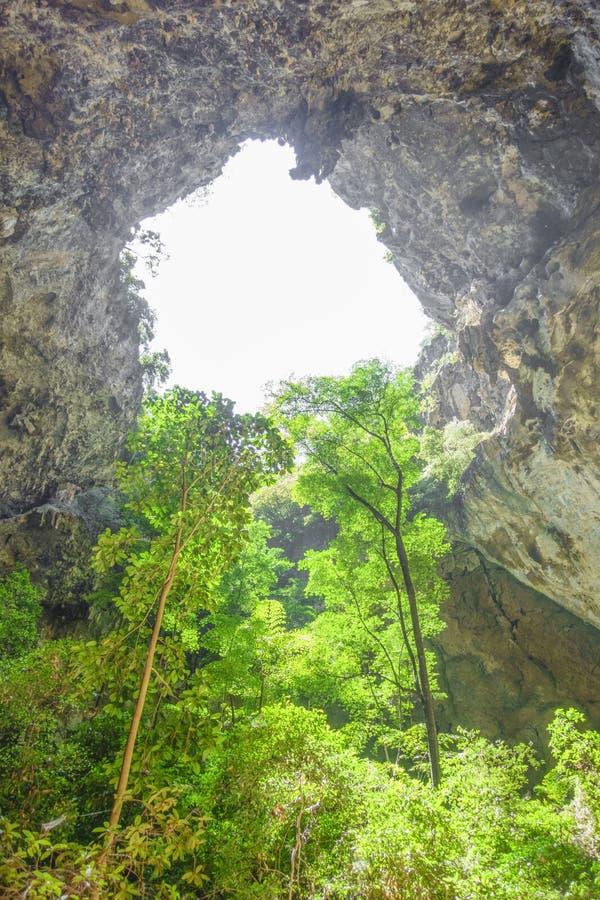 Träd i grotta royaltyfri bild