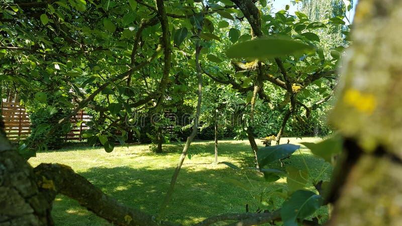 Träd i min trädgård royaltyfri fotografi