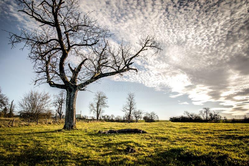 Träd i mitt av ett fält med en molnig himmel royaltyfri bild