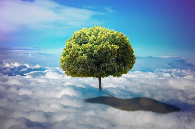Träd i molnen arkivfoto