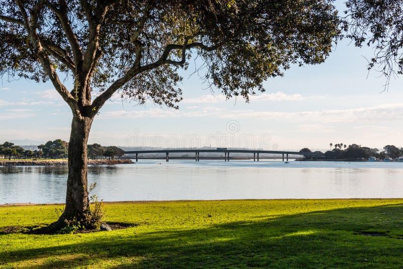 Träd i morgonljus på beskickningfjärden i San Diego royaltyfria bilder